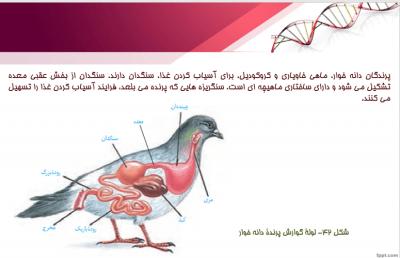 دهم 2 - پاورپوینت فصل ۲ زیست شناسی دهم | گوارش و جذب مواد