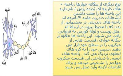 پاور ف 5 زی11 - پاورپوینت فصل پنجم زیست شناسی یازدهم تجربی|گفتار دوم
