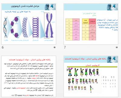 فصل ششم زیست یازدهم - پاورپوینت کامل فصل ششم زیست شناسی یازدهم تجربی