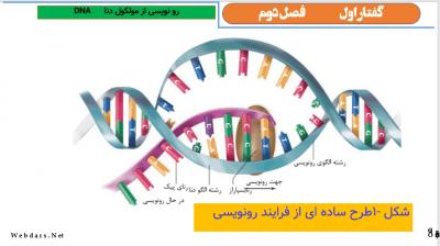 اول نمونه 1 - پاورپوینت زیست شناسی دوازدهم - فصل دوم